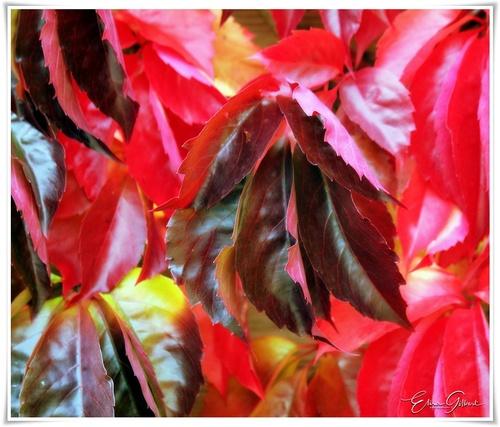 Nuancier d'automne
