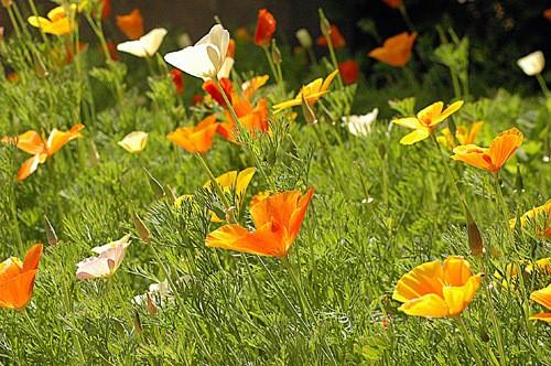 Printemps-flower.jpg