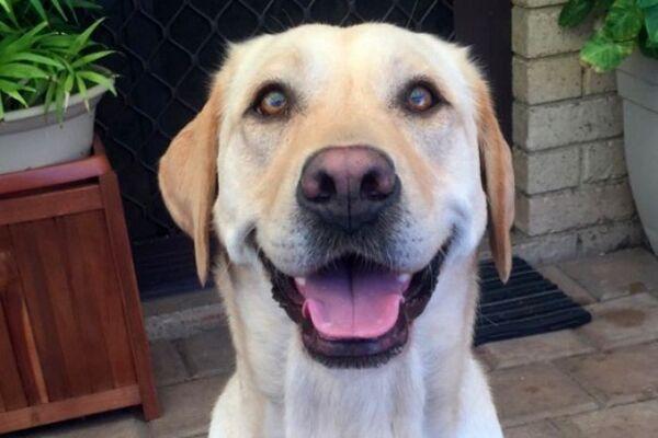 Australie : une chienne poignardée à mort sous les yeux de sa maîtresse dans un parc