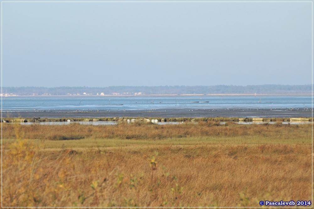 Entre le port de Gujan-Mestras et le port de Larros - 2/5