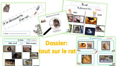 Le rat : dossier