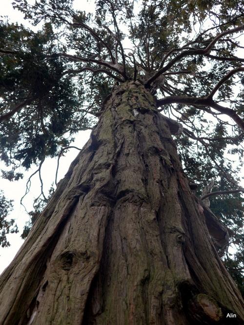 Jardin des plantes : vieux arbres ( 2° partie)