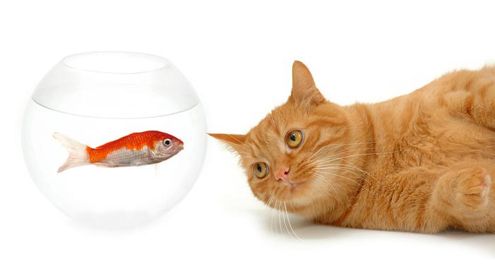 photos de chats divers