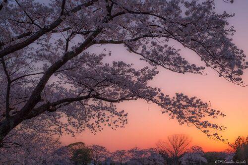 Hidenobu Suzuki et ses paysages japonais