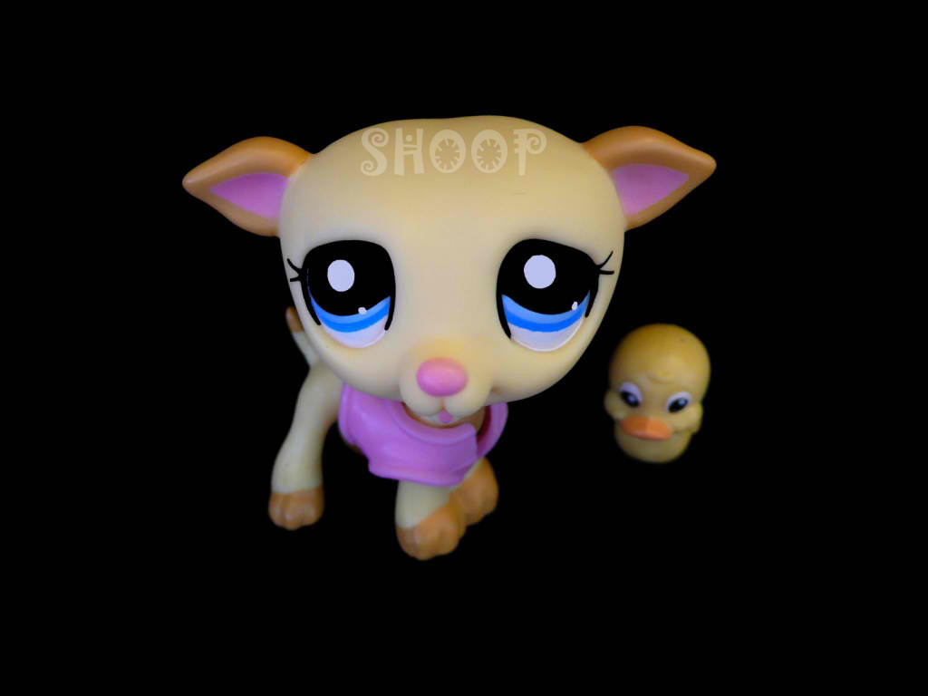 LPS 2041