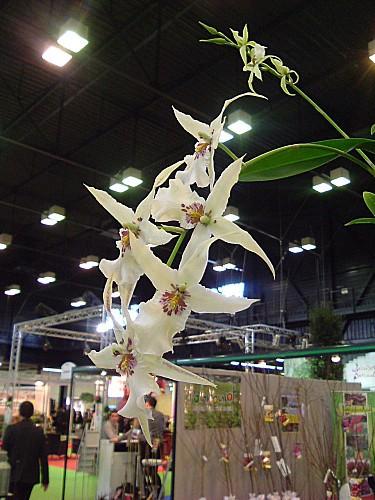 Orchidées 023