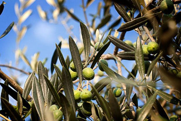 Trois plantes pour lutter contre l'hypertension