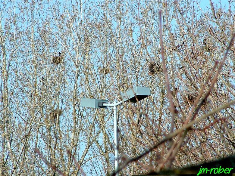 Les nids d'oiseaux à huit jours du printemps