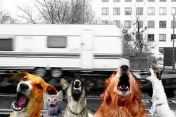 chiens_aboient