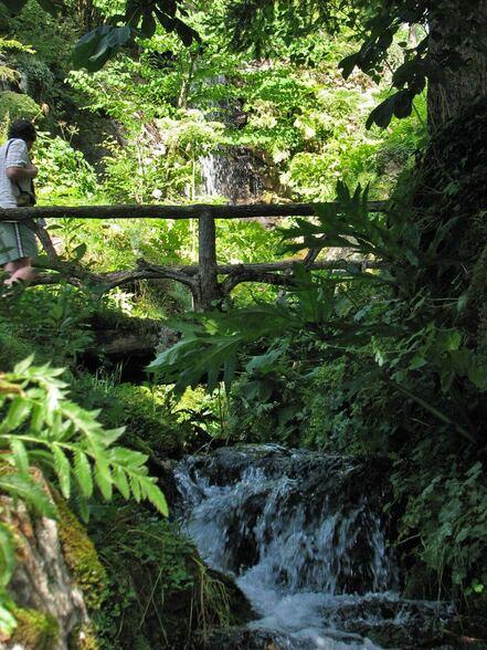 Samoëns : le Jardin botanique alpin La Jaÿsinia