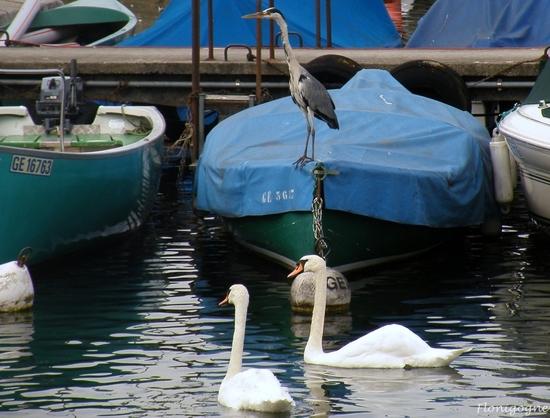 suisse 2009_oiseaux (218)