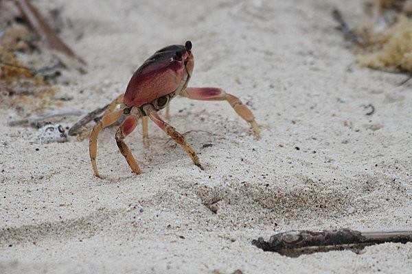 crabe -2-