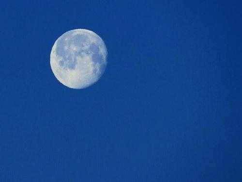 Entre Fleurs et Lune