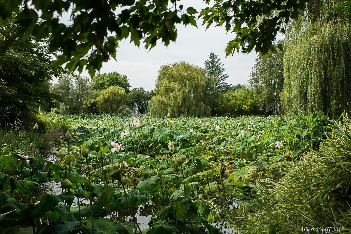 Au pays du lotus - 3
