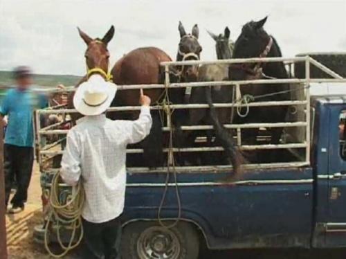Marchés à bestiaux (+transports)