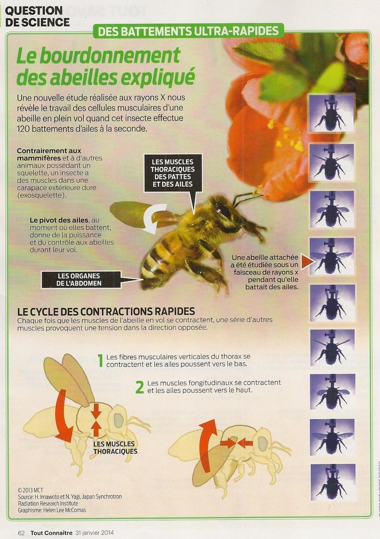 Sciences:   Le bourdonnement des abeilles expliqué