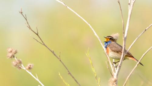 la Gorge-bleue