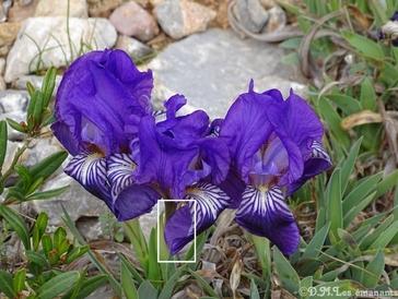 Les esprits des fleurs - les émanants