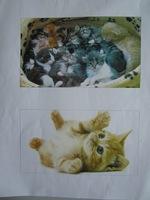 """Dernier exposé de l'année scolaire : """"Les chats"""""""