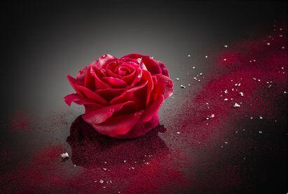 """Résultat de recherche d'images pour """"rose rouge sur rivage de mer"""""""