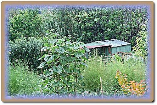 jardin-portes-ouvertes-25-copie-1.JPG