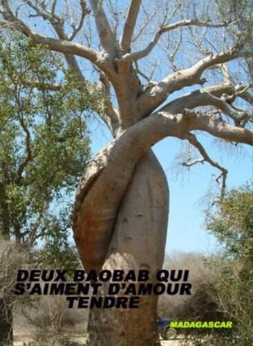 baobab-aiment.jpg