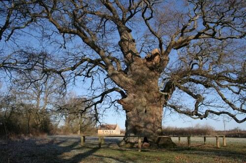 L'arbre de l'année 2015 en Basse-Normandie