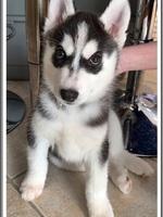 Rouxy (2 mois)