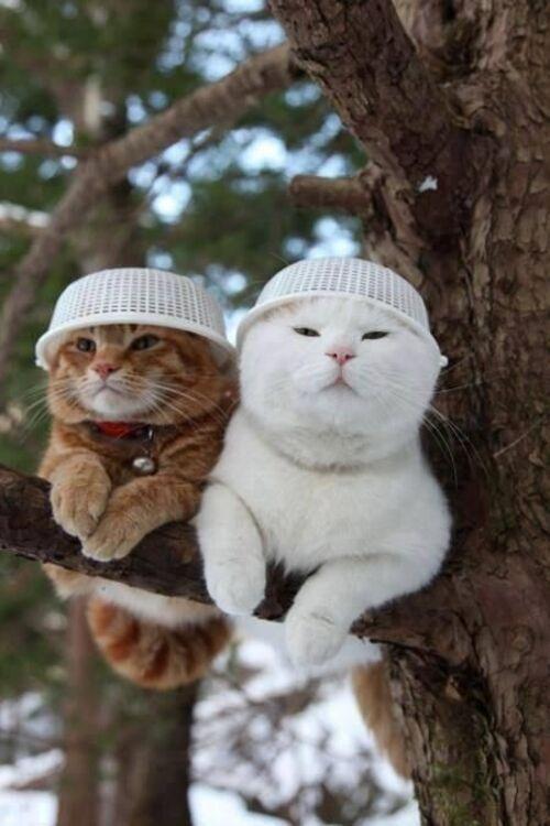 Chats---peautés