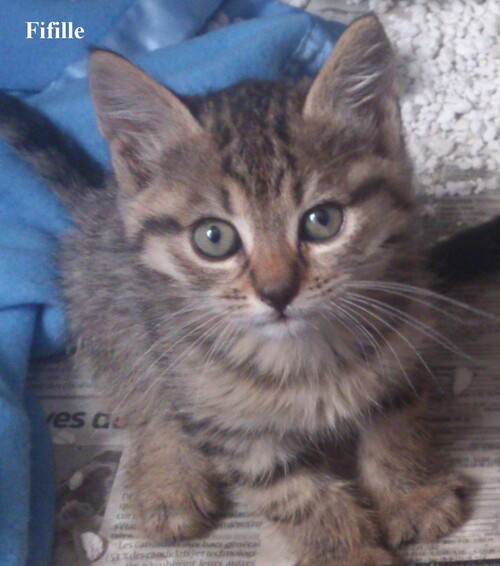 3 chatons à adopter