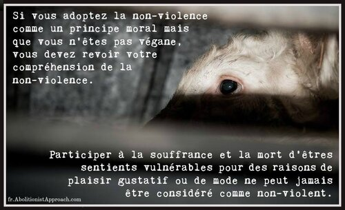 Bienvenue sur le site de la Cause Animale