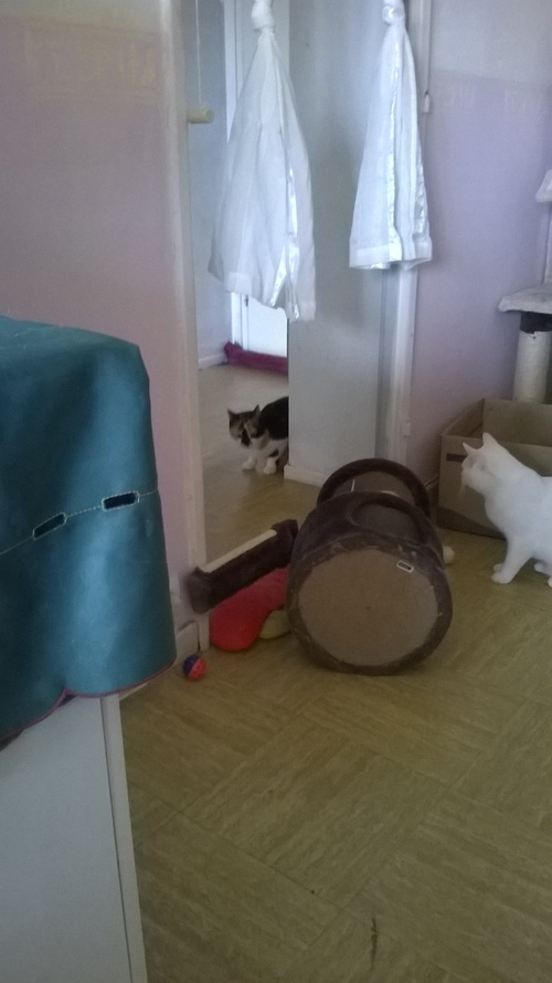 Boxe de chat