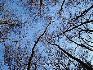 forêt janvier 2011