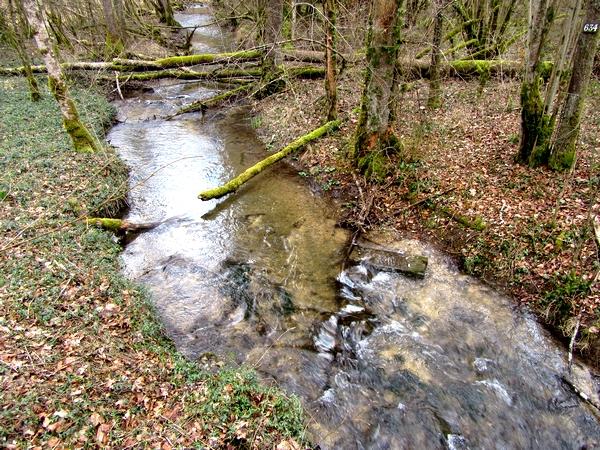 Une belle balade dans la forêt du Parc National des feuillus, avec la Société Mycologique du Châtillonnais
