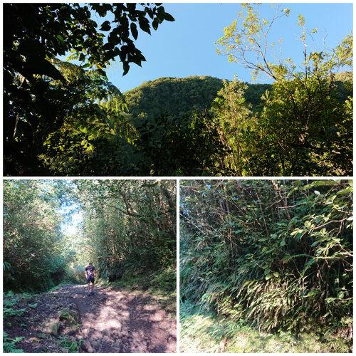 Grand Étang et les Cascades du Bras d'Annette