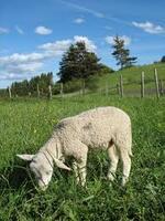 Entre le loup et l'agneau j'ai choisi !