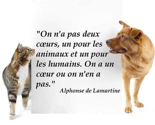 Non à l'abandon des animaux