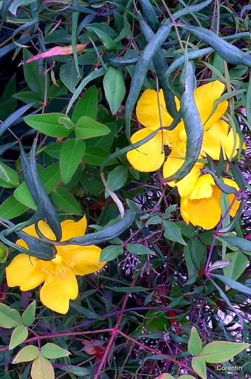 Des fleurs jaunes ...