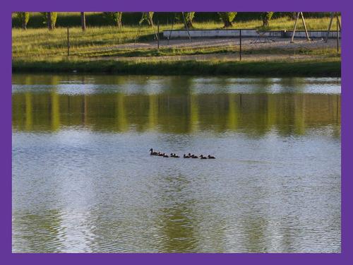 40350 Pouillon Lac de Luc