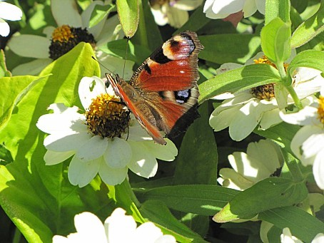 les-papillons-7776.JPG