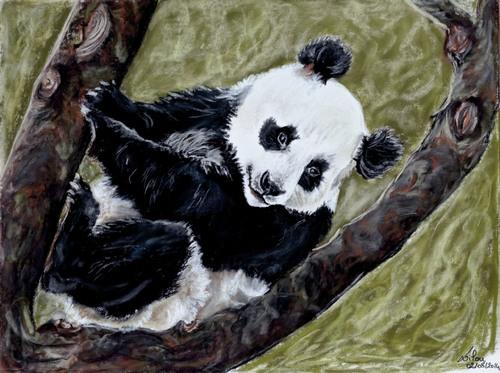 Petit panda sur sa branche (2)