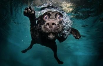 seth casteel under water dogs
