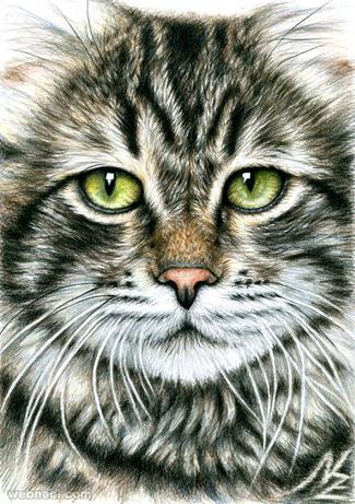 animal drawing cat