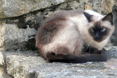Prats de Mollo: des chats