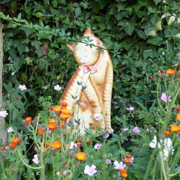 chat-roux-herbes-folles---juin-2014---plan-2--800x800-.jpg