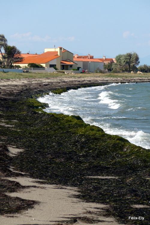Promenade au bord du lac marin de Salses (3)