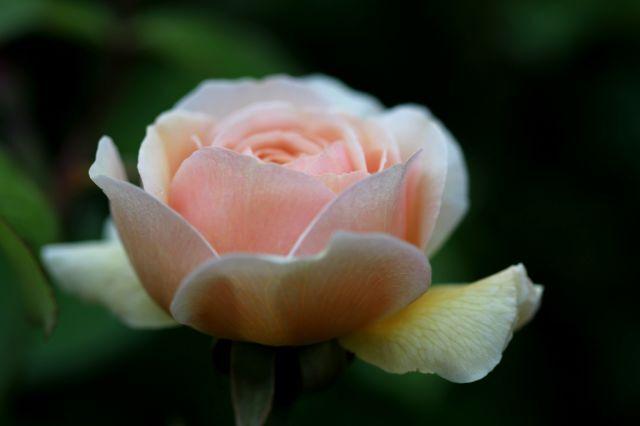 Un jour, une couleur : la vie en abricot