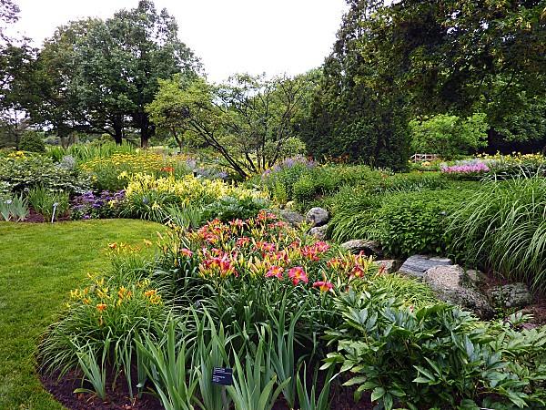 Montréal jardin botanique des hémérocalles