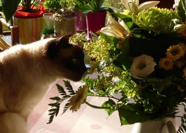 Quelles belles fleurs