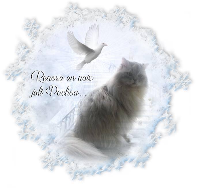Mon chat Pachou n'est plus